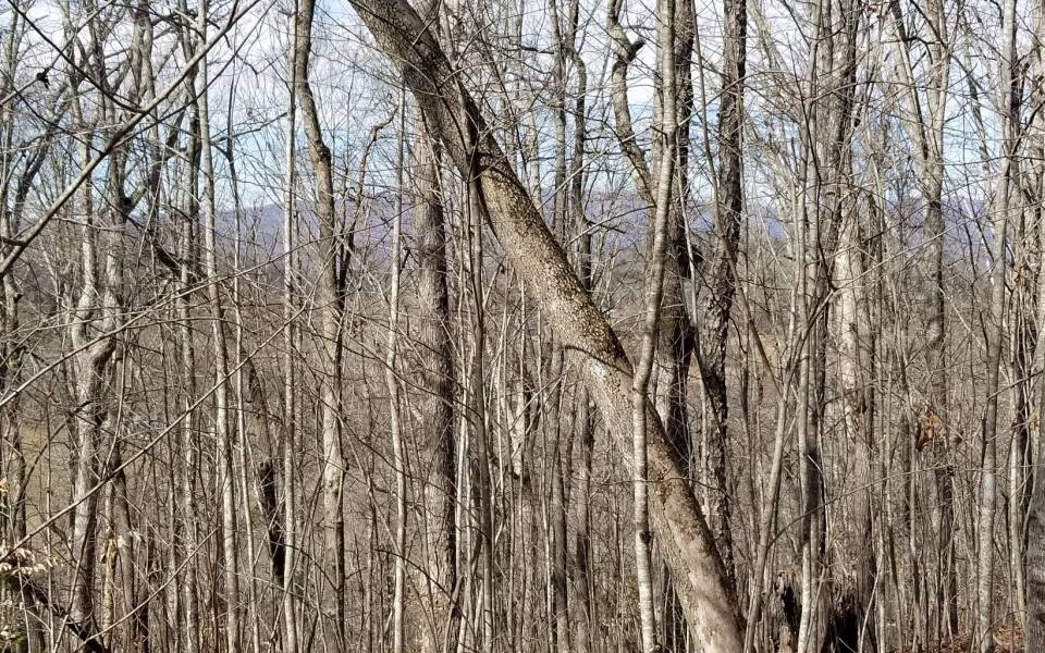 Hayesville,North Carolina Mountain land for sale TAHLEQUAH RIDGE, Hayesville, North Carolina 28904,Vacant lot,For sale,TAHLEQUAH RIDGE,304124, land for sale Advantage Chatuge Realty